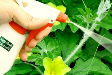 Put Hydrogen Peroxide On Your Plants And This Will Happen - Gardening Tips 1