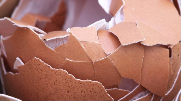 can eggshells be composted calcium carbonate