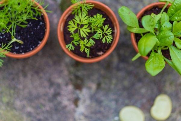 Herb Gardening for Beginners 1