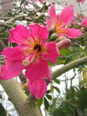 Citranatal Plants 12 Best Mosquito Repellent Plants 1
