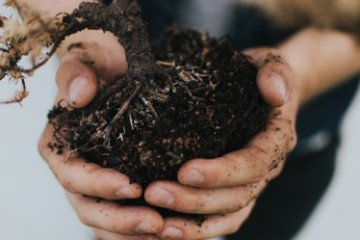 Soil Biology The Life Cycles within Soil 3