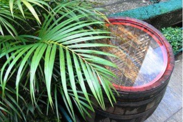 How To Collect Rainwater For Gardening (Must Read) 8