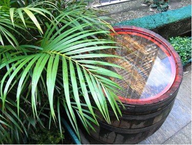 How To Collect Rainwater For Gardening (Must Read) 1