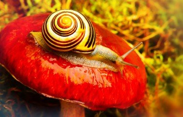 What Attracts Slugs And Snails Easy to Follow Guide 1