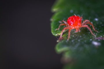 Spider Mites 11 Actionable Tips 2