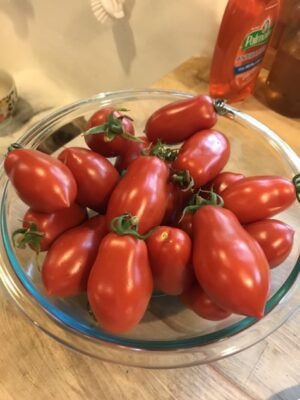 Your All About Roma Tomatoes Guide 1