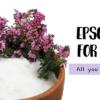 epsom salt for plants spsom salt in a bowl with flowers