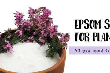 epsom salt for plants spsom salt in a bowl with flowers